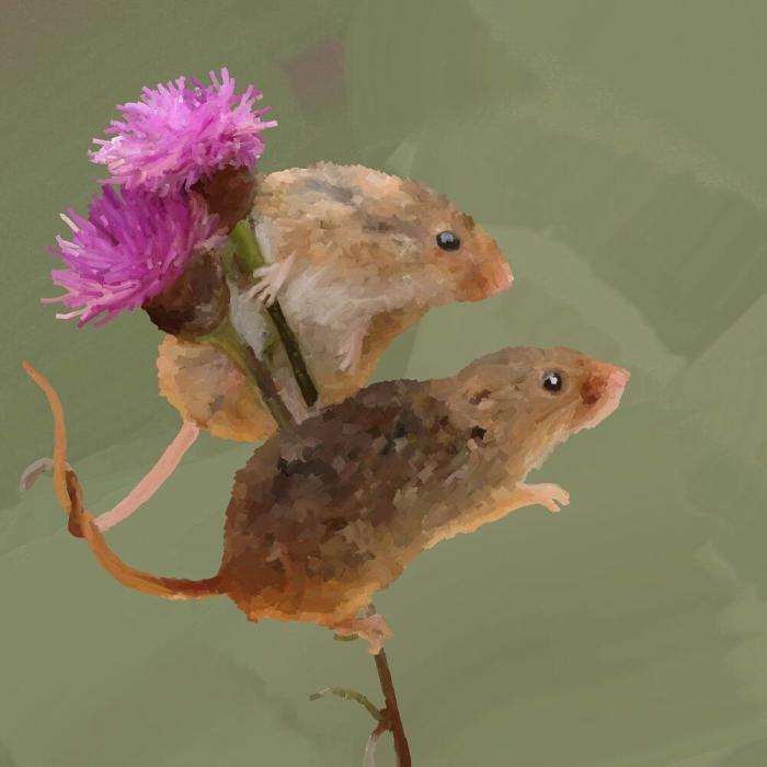 Последняя иллюстрация на сегодня.  Всем приятной недели и сладких снов/=_=/  #green #mice #flowers #field #digital  | Author: bigorangemango
