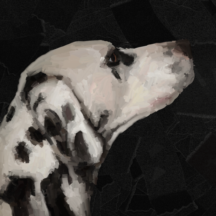 собаки милые  #digital #study #dalmatian #black #white #dog | Author: bigorangemango