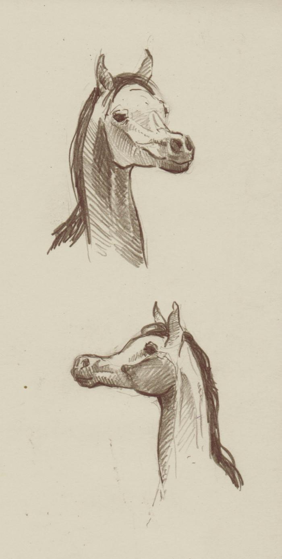 Нет, я не умер. Рисую на парах наброски, забиваю на учебу Фотки лошадок специально, ибо это не я большую часть слома, а оно само сломалось | Author:  Marmoratus