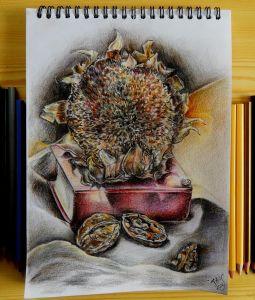#подсолнух #книга #орех #карандаши